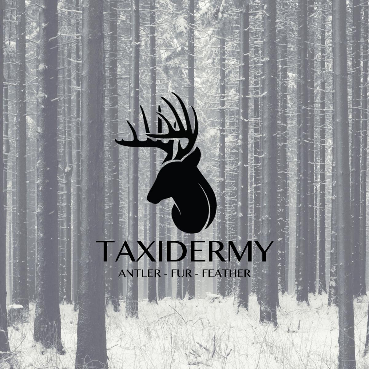 Taxidermy studio d designs colourmoves