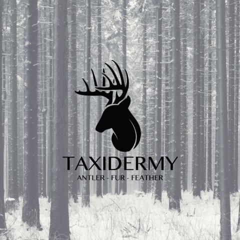 Logo studio d designs taxidermy colourmoves